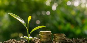 Capital natural: qué es y ejemplos