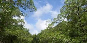 El bosque tropical amazónico