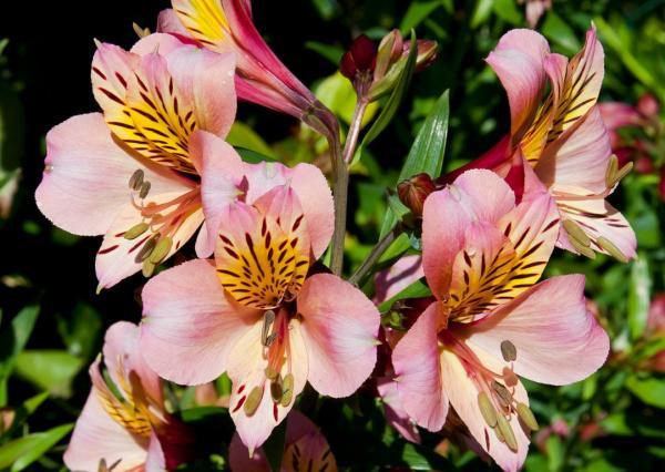 Plantas que se reproducen sexualmente - Qué es la reproducción sexual en las plantas y sus características