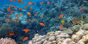 Qué es megadiversidad: significado y ejemplos