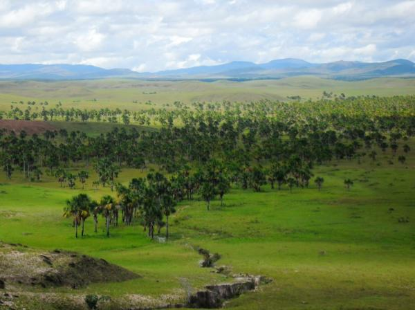 Sabana de Palmeras: características, flora y fauna