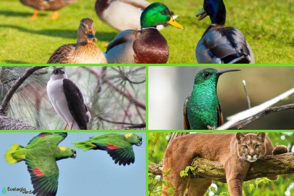 Animales en peligro de extinción en El Salvador - Otros animales en peligro de extinción en El Salvador