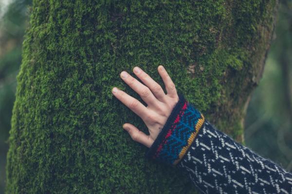 Musgos: qué son, características y ejemplos - Qué son los musgos