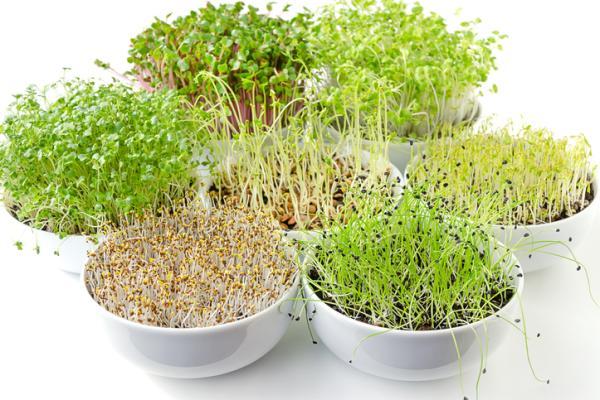 Plantar lentejas: cuándo y cómo hacerlo