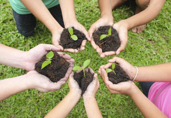 Restauración ecológica: qué es, tipos y ejemplos