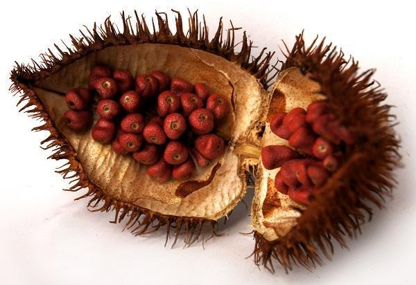 30 nombres de frutas tropicales raras - Achiote