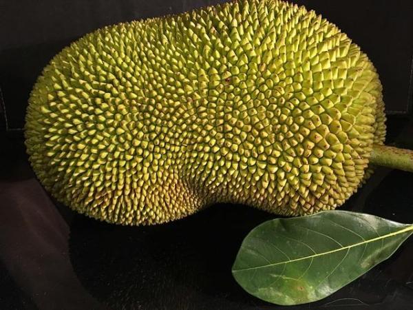 30 nombres de frutas tropicales raras - Yaca