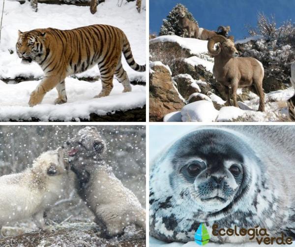 15 animales de Rusia