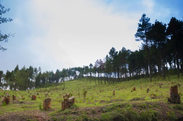 Problemas ambientales en Guatemala - Deforestación en Guatemala