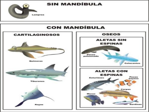 Clasificación de los peces