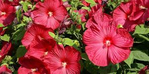 16 plantas de jardín con flores resistentes al sol