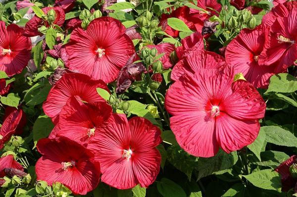 16 plantas de jard n con flores resistentes al sol lista y fotos - Plantas de jardin exterior ...