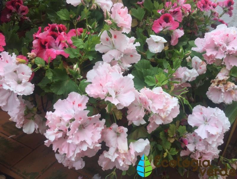 16 plantas de jard n con flores resistentes al sol lista - Plantas muy resistentes ...