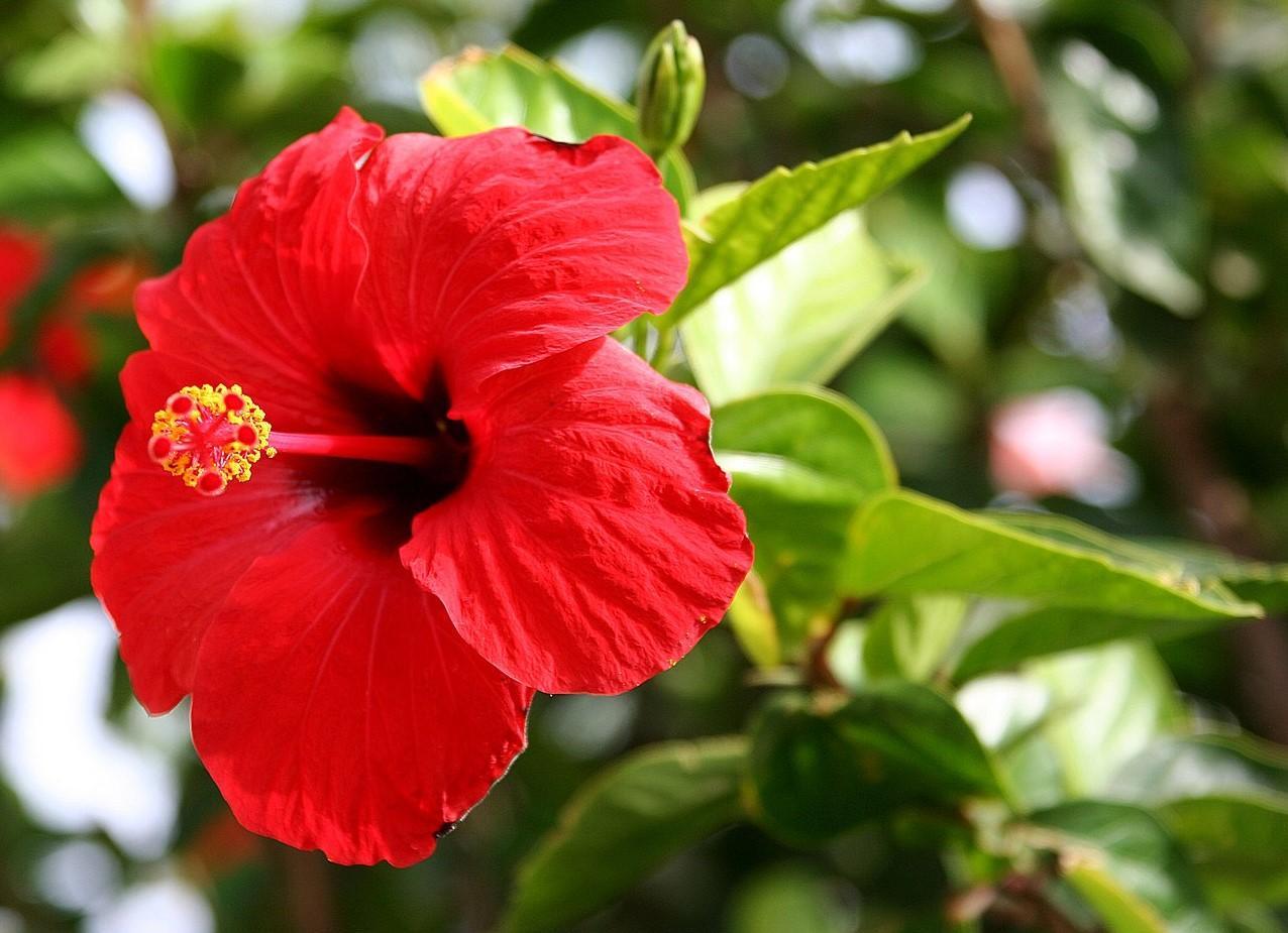16 plantas de jard n con flores resistentes al sol lista for Jardineria exterior con guijarros