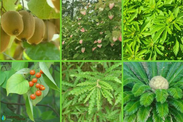 Plantas dioicas: qué son y ejemplos - Ejemplos de plantas dioicas
