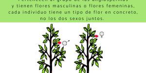 Plantas dioicas: qué son y ejemplos