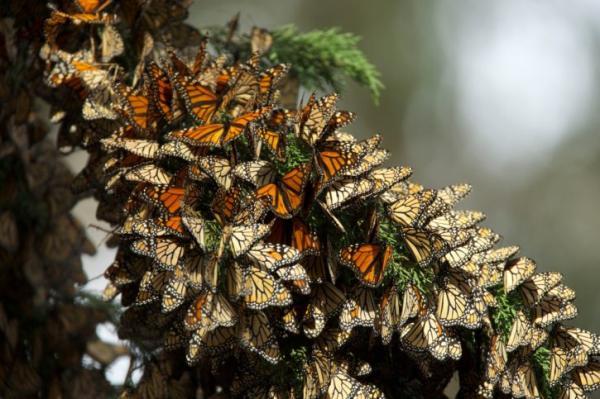 Cuáles son los animales que migran y por qué - Qué animales migran - ejemplos