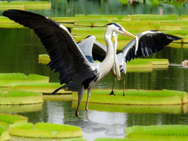 Cuál es la importancia de la conservación de la flora y la fauna - Cuál es la importancia de la conservación de la flora y la fauna
