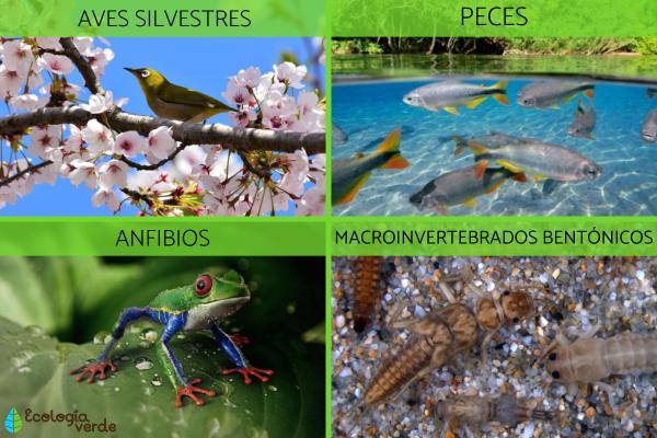 Bioindicadores: qué son, tipos y ejemplos - Ejemplos de bioindicadores ambientales