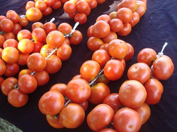 +30 tipos de tomates - Tomate de colgar