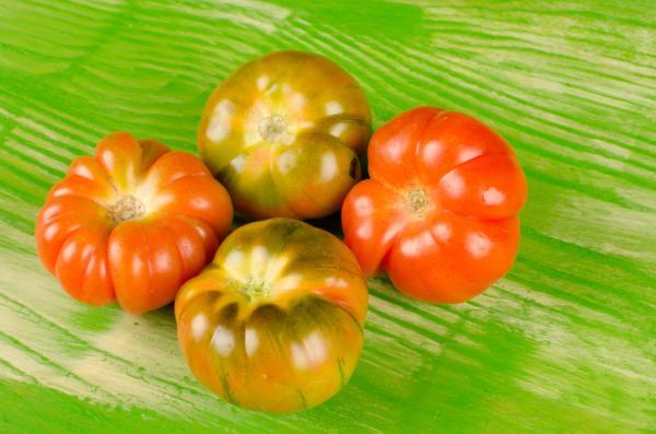 +30 tipos de tomates - Tomate Raf