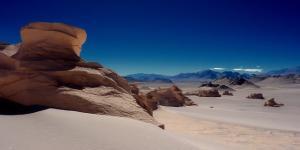Flora y fauna del desierto de Atacama