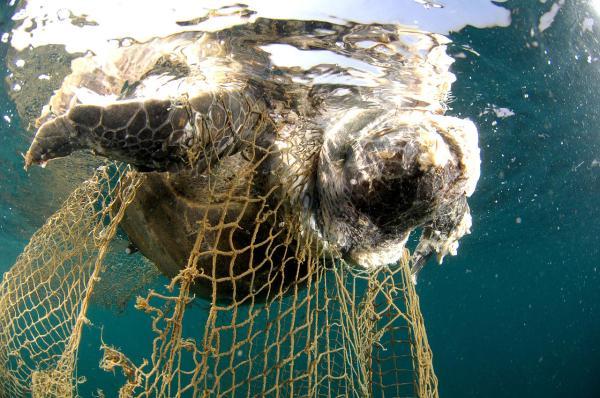 Qué son las islas de plástico y cómo se forman - Consecuencias de las islas de plástico