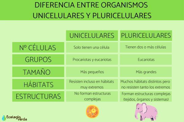 Organismos unicelulares y pluricelulares: ejemplos y diferencias - Diferencias entre organismos unicelulares y pluricelulares