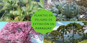 Plantas en peligro de extinción en Paraguay