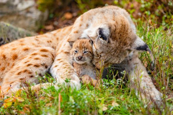 Funciones vitales de los seres vivos - La reproducción