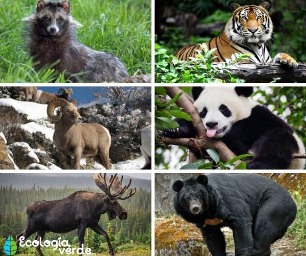 Qué animales viven en el bosque templado - Qué animales son los que viven en el bosque templado