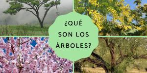 Qué son los árboles