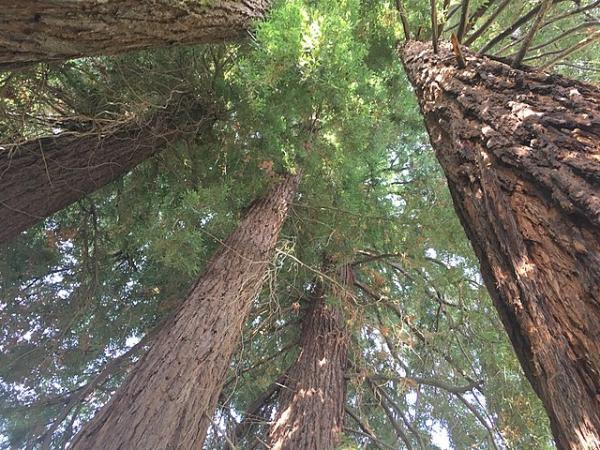 Qué son los árboles - Qué son los árboles y sus características