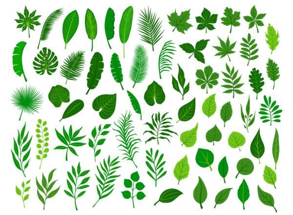 Partes de una hoja y sus funciones - Tipos de hojas
