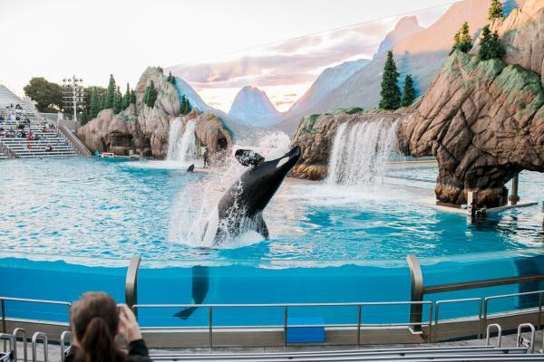 Por qué la orca está en peligro de extinción - Amenazas humanas que son causa de las orcas en peligro de extinción