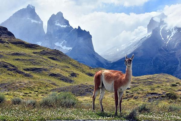40 animales nativos de Chile