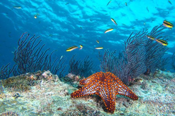 Estrella de mar: características, reproducción y taxonomía - Taxonomía de la estrella de mar