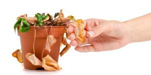 Cómo revivir una planta