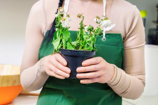 Revivir una planta: cómo hacerlo - Revivir una planta ahogada - las claves