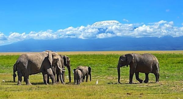 Día Mundial de la Naturaleza - Protegiendo a los elefantes