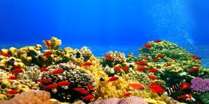 Qué es un arrecife de coral