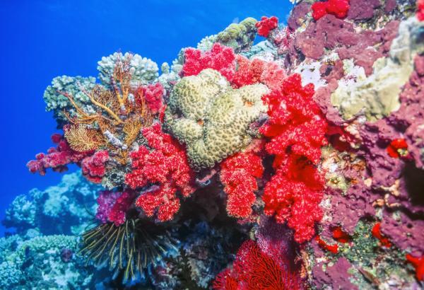 Qué es un arrecife de coral - Qué es y cómo se forma un arrecife de coral