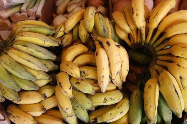 Tipos de plátanos - Cavendish
