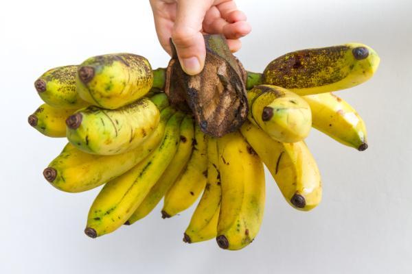 Tipos de plátanos - Gros Michel