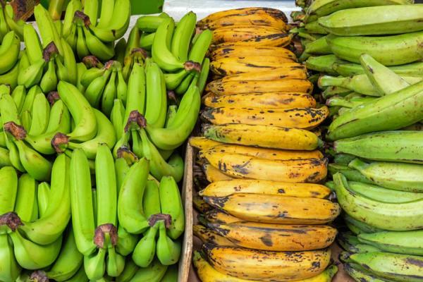 Tipos de plátanos - Plátano macho o banana