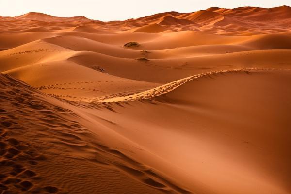 Ecosistema del desierto: características, flora y fauna