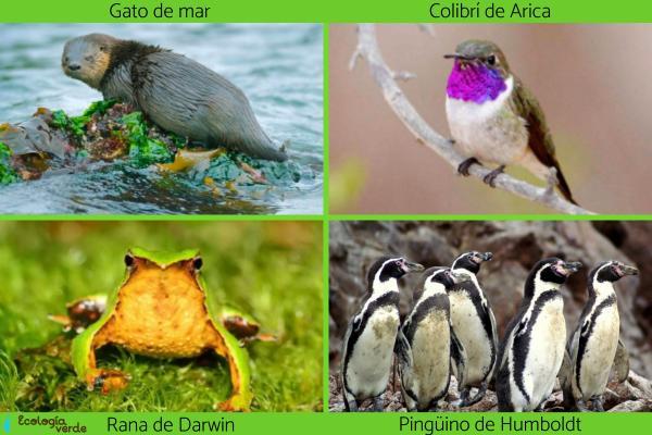 Flora y fauna de Chile - Animales en peligro de extinción en Chile