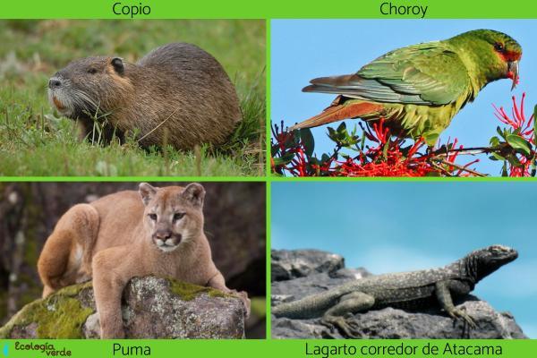 Flora y fauna de Chile - Fauna de Chile