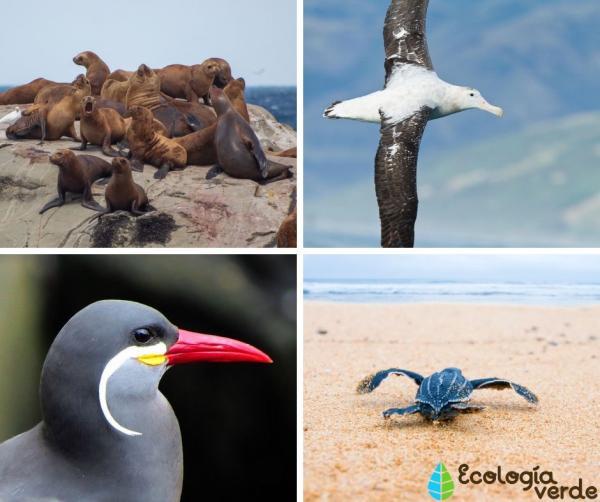 +25 animales de la costa peruana