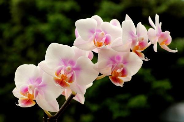 Cómo cuidar las orquídeas - Luz y ubicación para las orquídeas